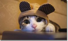 Cute kitty hat cute animals eyes cats hat adorable kitten