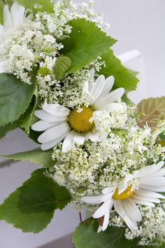 Queen Anne's Lace & Daisies