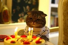 The Existential Birthday | The 100 Most Important Cat Pictures Of All Time