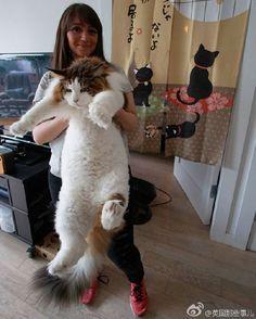 Кот-богатырь