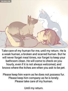 Take care of my human … kitty, cat, kitten, pet loss, pet Crazy Cat Lady, Crazy Cats, Gato Angel, I Love Cats, Cute Cats, Funny Kitties, Adorable Kittens, Funny Dogs, Animals And Pets