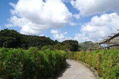 안녕하세요. 제주도펜션 스파벨리스입니다. 오늘은 날씨가 좋은날~! 돌의 기운을 받으면서 미로를 탈출하는 재미를 느끼는  런닝맨 촬영장소로 유명한 제주도관광지추천으로 메이즈랜드를 소개해드릴까 합니다.   원문보기 : http://blog.naver.com/travelwoori/70189527671