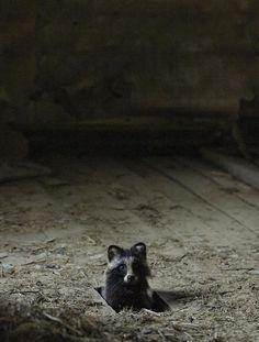 Animales que ocuparon lugares abandonados :)