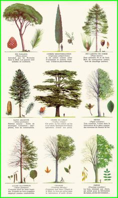 Les Arbres : les silhouettes – Gardening for beginners and gardening ideas tips kids Garden Trees, Trees To Plant, Garden Plants, Landscape Drawings, Landscape Design, Tree Leaf Identification, Watercolor Trees, Landscaping Plants, Tree Art
