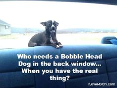 20 Chihuahua Memes That will Make You Laugh Chihuahua Art, Funny Chihuahua, Little Dogs, Animal Memes, Cute Baby Animals, Dog Owners, Funny Dogs, Poodle, Puppy Love