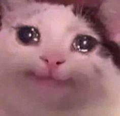 Cute Cats in the World Sad Cat Meme, Cute Cat Memes, Cute Animal Memes, Cute Love Memes, Animal Jokes, Cute Funny Animals, Funny Animal Pictures, Cute Cats, Doge Meme