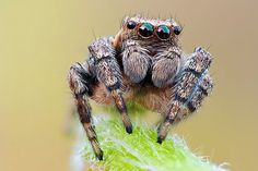 Macro Photos of Insects ~ Alpin Funny Picture! - Macro Photos of Insects ~ Alpin Funny Picture! Macro Fotografie, Fotografia Macro, Pet Spider, Spider Mites, Spider Art, Animals And Pets, Cute Animals, Scary Animals, Photo Macro
