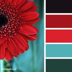 Color Palettes 47217496082039176 - Bedroom Colors Schemes Aqua 58 Ideas For 2019 Source by miladydewint Dekor Ideen Farbschemata Color Schemes Colour Palettes, Red Colour Palette, Color Combos, Green Pallete, Bedroom Paint Colors, Bedroom Color Schemes, Red And Teal, Design Seeds, Teal Colors