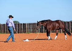 Downunder Horsemanship | Training Tip of the Week: How to build your horse's confidence to a scary object