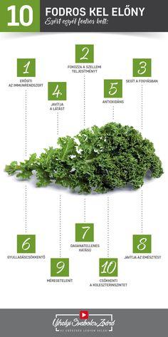 A fodros kel nagy mennyiségű C-vitamint tartalmaz, de megtalálható benne például a folsav, az A-, E- és K-vitamin, a béta-karotin, rostok, az esszenciális aminosavak, valamint az Omega-3 és az Omega-6 zsírsavak is. A fodros kel fogyasztásával csökkenthetjük a daganatos betegségek kockázatát, javíthatjuk szemeink, bőrünk és hajunk egészségét, támogathatjuk emésztésünket és a bélflóra regenerálódását. Használd ki te is legalább hetente 1 alkalommal a fodros kel előnyeit! Az egészség legyen… Herbs, Herb, Spice