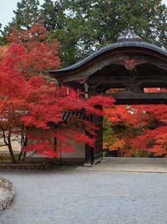 「もみじの永観堂」と呼ばれる東山屈指の名所 Beautiful World, Beautiful Gardens, Beautiful Places, Japanese House, Japanese Mansion, Japanese Gardens, Japanese Nature, Kobe Japan, Japan Garden
