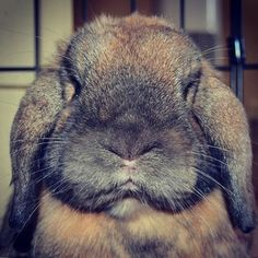 """I will end you."" 