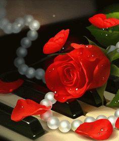 Selección de lindas imágenes de rosas con movimiento para celular para sorprender y alegrarles la vida a tus seres queridos en cualquier momento del día