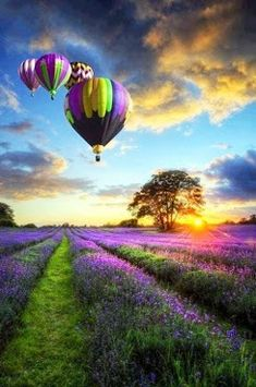 Air Balloons Over A Lavender Field, Lyon, France