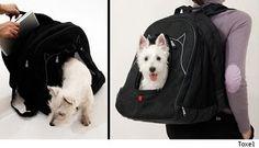 Secretly bringing a dog to school...
