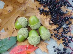 Survival Skills: 10 Most Nutritious Fall Wild Edible -by Tim MacWelch and posted on September 24, 2013