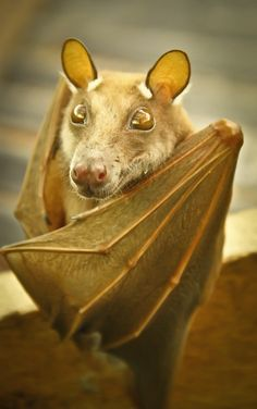 Bat with Beautiful Gold Coloring