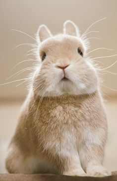 Whiskers and paws. Cute Baby Bunnies, Funny Bunnies, Cute Baby Animals, Animals And Pets, Cute Babies, Cute Bunny Pictures, Pet Rabbit, House Rabbit, Fluffy Bunny