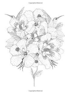 Amazon.com: Birdtopia: Libro de colorante (9781780677552): Daisy Fletcher: Libros