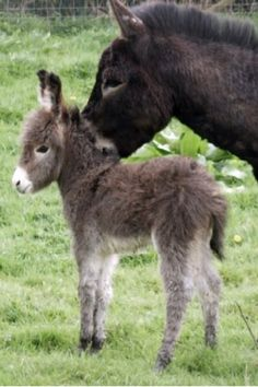 Donkey baby # baby animals cute baby animals from Aww! Cute Baby Animals, Farm Animals, Animals And Pets, Funny Animals, Animals In The Bible, Baby Donkey, Amor Animal, Baby Unicorn, Cute Creatures