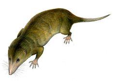 Adelobasileus, Triassic | アデロバシレウス - Adelobasileus