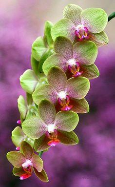 Orquídeas - Orchids - Comunidad - Google+
