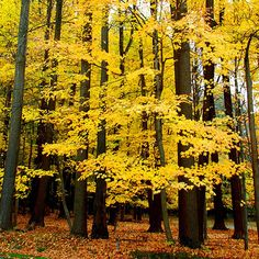 60 Breathtaking Fall Images for Your Inspiration - Fall Leaves The Photo Argus