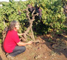 """Focus – Perché l'Etna è un territorio unico? Lo spiegano i produttori …    """"C'è un contrasto incredibile – spiega Federico Curtaz (Tenuta di Fessina) – in questi luoghi. In un clima quasi africano, c'è una montagna, il vulcano, che ci porta improvvisamente a mille chilometri più nord. Abbiamo una luce incredibile nei vigneti alle sue falde, dei suoli di montagna e dei vitigni tipicamente mediterranei..."""""""