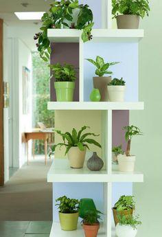 Plantas. Activando nuestra Riqueza, con el Elemento Madera pequeña. Coordenada Sureste nuestra Abundancia Material. Salas y negocios