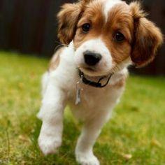 #dog #puppy