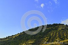 Beautiful Hill Full Of Trees - Download From Over 25 Million High Quality Stock Photos, Images, Vectors. Sign up for FREE today. Image: 43958669