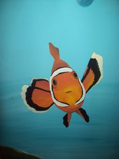 close up clown fish = clown fish remind me of my uncle  <3