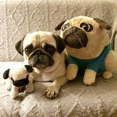 Puggy has his buddies