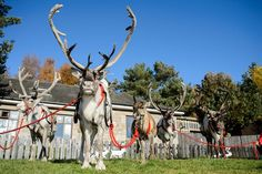 Arnold Clark is proud to support the Cairngorm Reindeer Centre