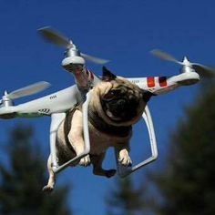 Amazon's Doggy Drop. What is your caption?