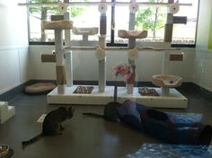 Big, beautiful cat rooms for the lucky kitties at the SPCA of Texas!
