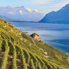Photos That Will Make You Fall In Love With Switzerland - Switzerland Photos Travel Switzerland Is Undoubtedly One Of The Most Scenic Places On Earth Here Are Photos To Inspire You To Travel To Switzerland Skip To Content It Is So Cute And Charm Beautiful Places To Travel, Wonderful Places, Beautiful World, Places In Switzerland, Switzerland Vacation, Lake Geneva Switzerland, Geneva City, Wine Vineyards, In Vino Veritas