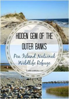 Pea Island National Wildlife Refuge is a hidden gem in The Outer Banks. Find it on Hatteras Island in Rodanthe. OBX! by esmeralda