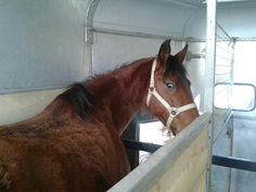 Rhut's Horse in,Spain