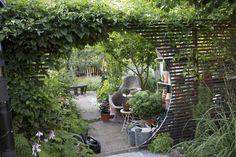 Ingång till krydd- och köksträdgård / Syrsans Trädgård Gotland Side Garden, Garden Trellis, Herb Garden, Pergola Planter, Garden Windows, Modern Backyard, Garden Living, Garden Spaces, Dream Garden