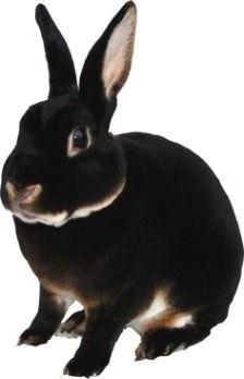 Radiant rabbit #rabbitlife