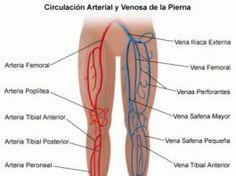 100 Ideas De Vascular Periférico Radiología Anatomía Fisiología