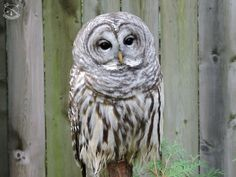 An Ecomuseam Zoo? An Example To Follow or A Waste of Time? Part 2 Animals Beautiful, Owl, Bird, Photography, Cutest Animals, Photograph, Owls, Birds, Fotografie