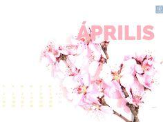 2016. április naptáras letölthető háttérkép - Masni