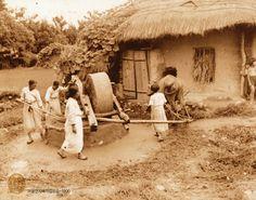 마을연자매 (1900년)