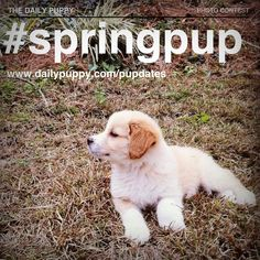 Step into spring one paw at a time! Your active puppy can be our Woof of the Week! Pupdate a photo with #SpringPup to enter!