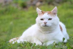 休憩 - かご猫 Blog