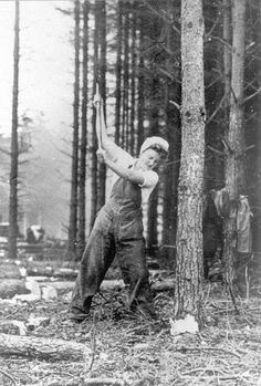 A member of the WTC lays in with the axe in Bowmont Forest, also in Roxburghshire. The lumberjills were taught to cut close to the base of the tree so that no timber was wasted.