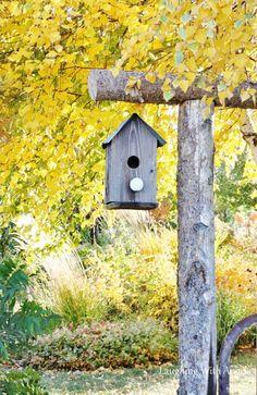 Grace Gardens Birdhouse!