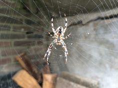 Spinnen tellen
